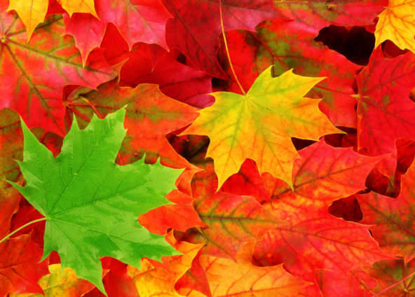 Yoga et Ayurveda : Equinoxe d'automne